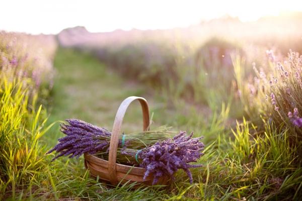 067_Eddie_Judd_photography_lavender_bridal_boho_6277